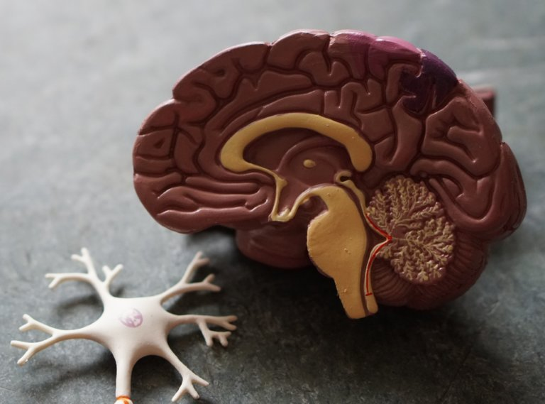 Neurosurgery Expert is Unqualified to Opine on Neuro-otolaryngology Standard of Care